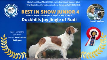 kooikerhondje BIS 4junior Duckhills Joy Jingle of Rudi