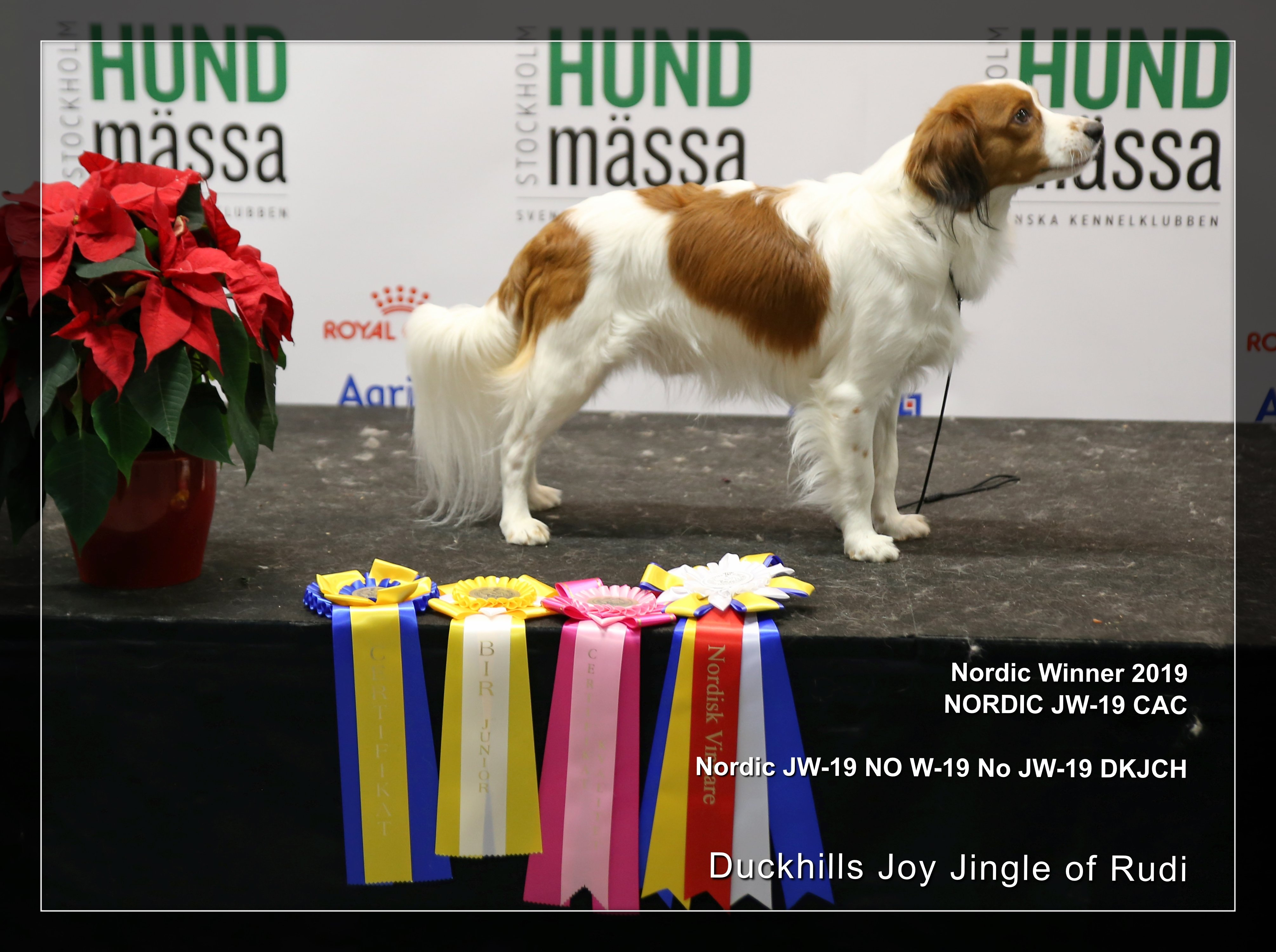 Nordic JuniorWInner 19 Duckhills Joy Jingle of Rudi