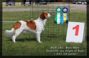 Duckhills Joy Jingle of Rudi, ljungskile 13 months